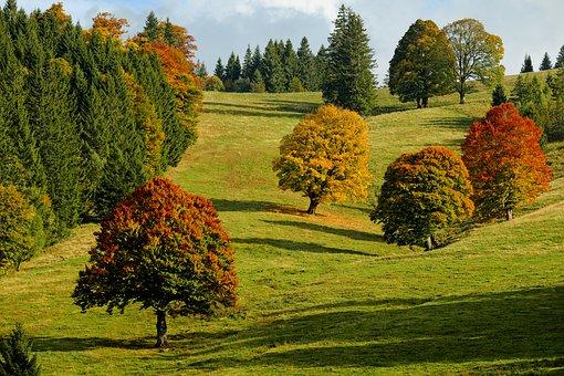 Choisir l'emplacement d'un arbre
